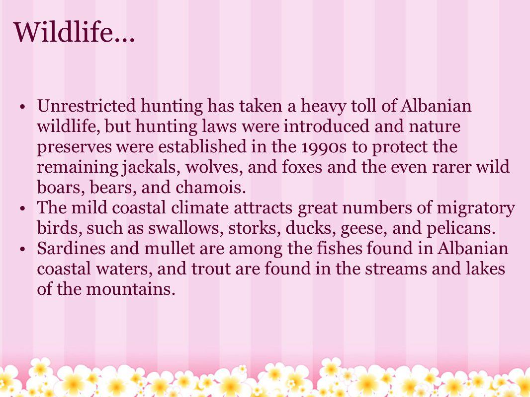 Wildlife...