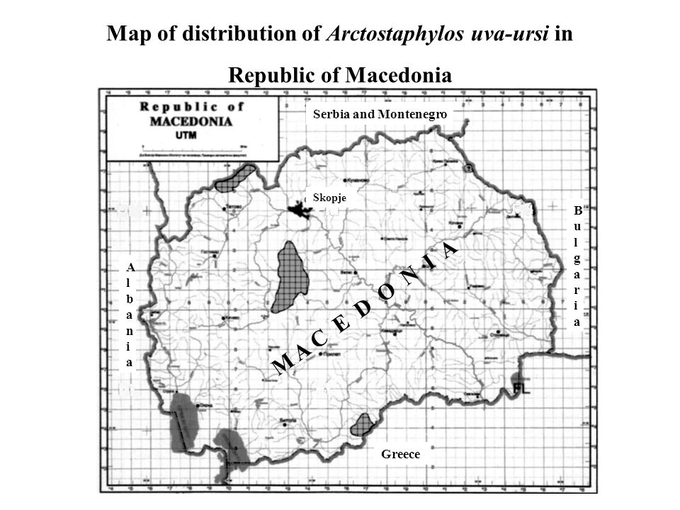 Map of distribution of Arctostaphylos uva-ursi in Republic of Macedonia Greece Serbia and Montenegro BulgariaBulgaria AlbaniaAlbania Skopje M A C E D O N I A