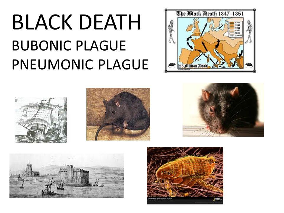 BLACK DEATH BUBONIC PLAGUE PNEUMONIC PLAGUE