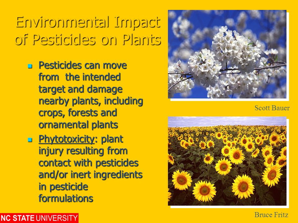Environmental Impact of Pesticides on Plants Pesticides can move from the intended target and damage nearby plants, including crops, forests and ornamental plants Pesticides can move from the intended target and damage nearby plants, including crops, forests and ornamental plants Phytotoxicity: plant injury resulting from contact with pesticides and/or inert ingredients in pesticide formulations Phytotoxicity: plant injury resulting from contact with pesticides and/or inert ingredients in pesticide formulations Scott Bauer Bruce Fritz