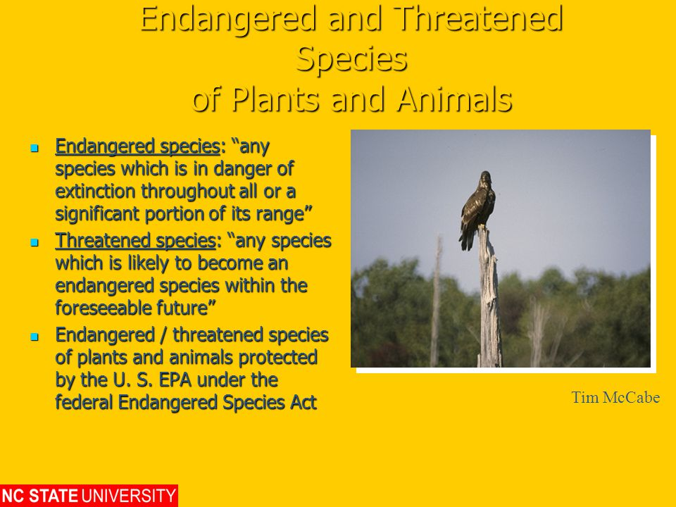Endangered and Threatened Species of Plants and Animals Endangered species: any species which is in danger of extinction throughout all or a significant portion of its range Endangered species: any species which is in danger of extinction throughout all or a significant portion of its range Threatened species: any species which is likely to become an endangered species within the foreseeable future Threatened species: any species which is likely to become an endangered species within the foreseeable future Endangered / threatened species of plants and animals protected by the U.