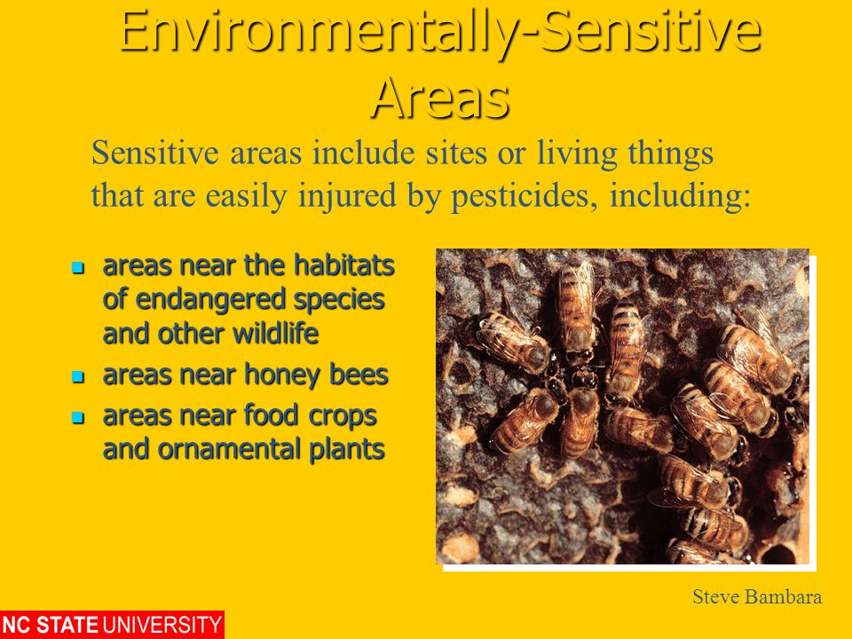 Environmentally-Sensitive Areas areas near the habitats of endangered species and other wildlife areas near the habitats of endangered species and other wildlife areas near honey bees areas near honey bees areas near food crops and ornamental plants areas near food crops and ornamental plants Sensitive areas include sites or living things that are easily injured by pesticides, including: Steve Bambara