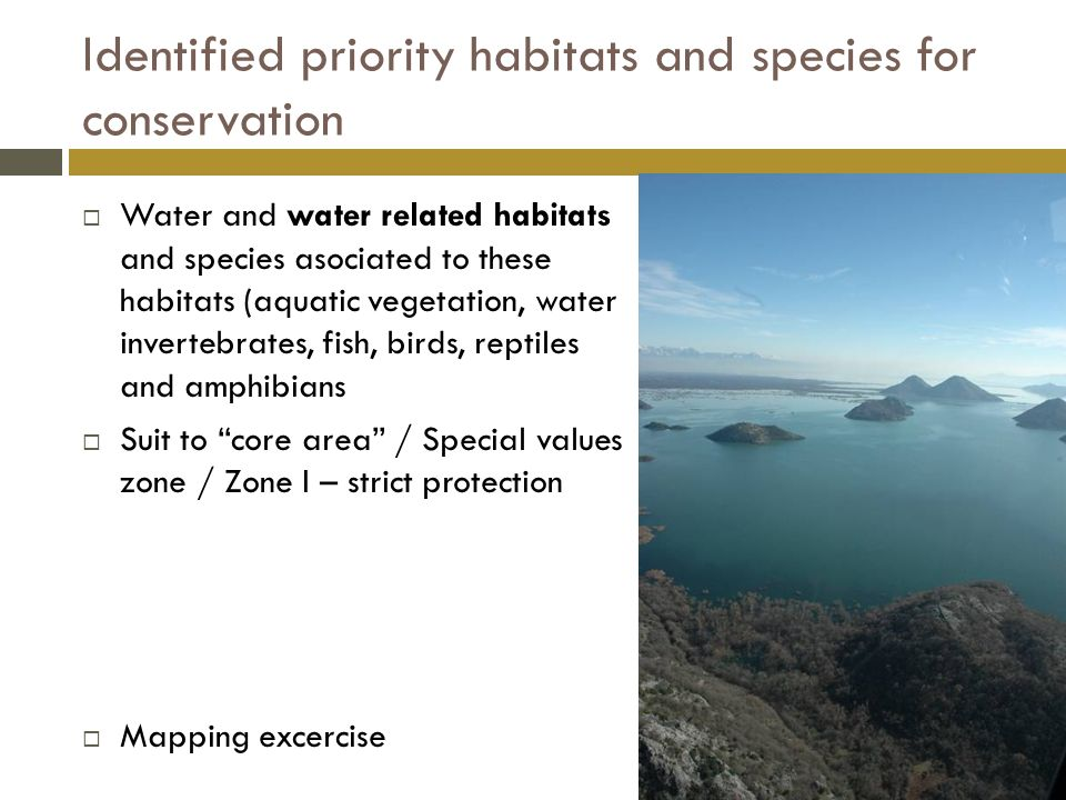Identified priority habitats and species for conservation  Water and water related habitats and species asociated to these habitats (aquatic vegetation, water invertebrates, fish, birds, reptiles and amphibians  Suit to core area / Special values zone / Zone I – strict protection  Mapping excercise