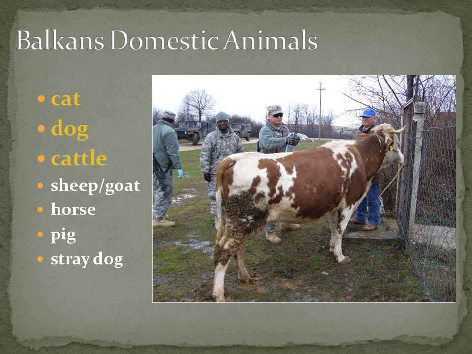 cat dog cattle sheep/goat horse pig stray dog