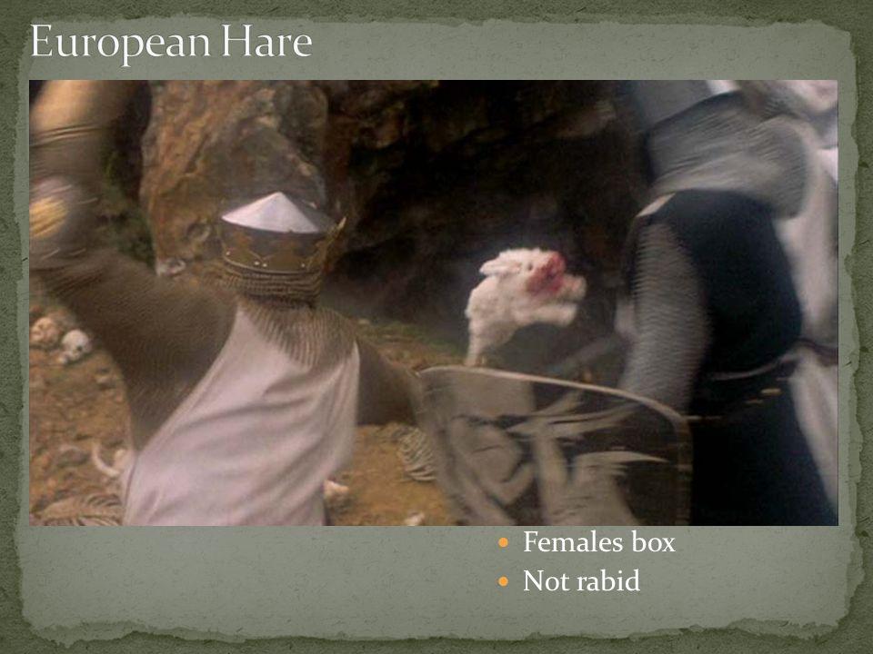 Females box Not rabid