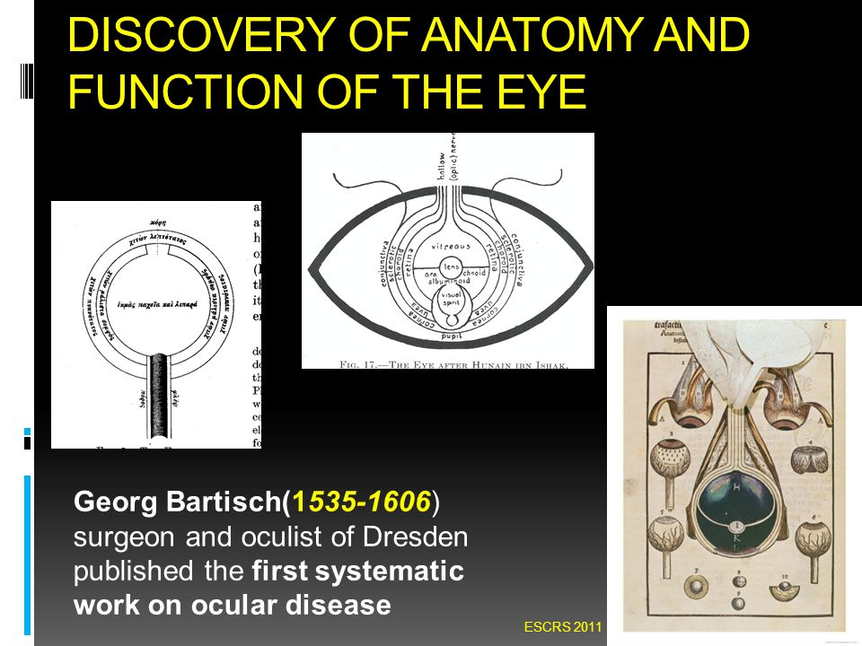 DISCOVERY OF ANATOMY AND FUNCTION OF THE EYE Georg Bartisch(1535-1606) surgeon and oculist of Dresden published the first systematic work on ocular di