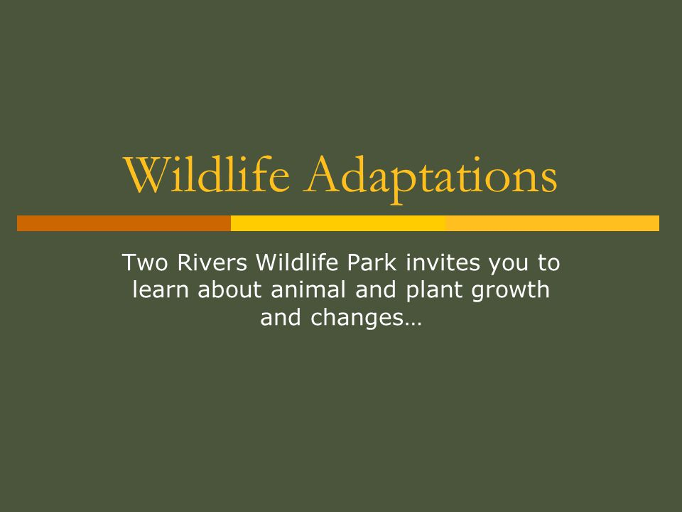 Wildlife Adaptations Two Rivers Wildlife Park invites you to learn about animal and plant growth and changes…