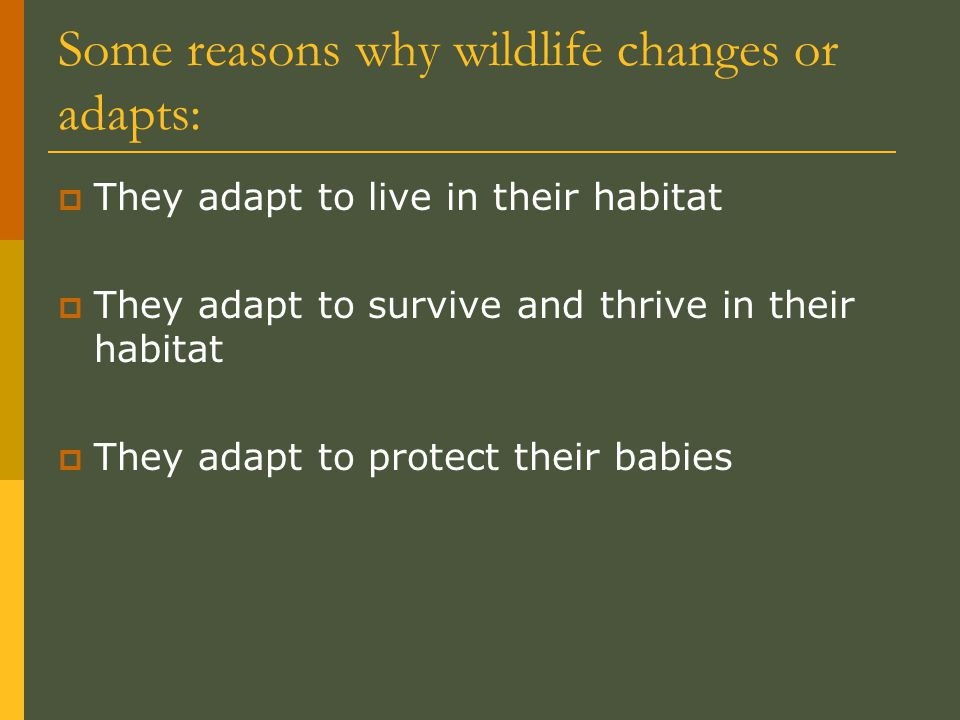 Some reasons why wildlife changes or adapts:  They adapt to live in their habitat  They adapt to survive and thrive in their habitat  They adapt to