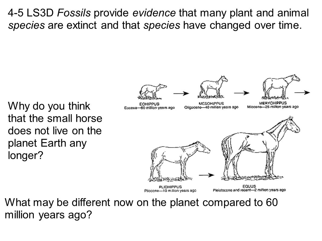 4-5 LS3D Fossils provide evidence that many plant and animal species are extinct and that species have changed over time. What may be different now on
