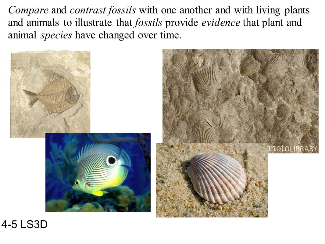 Compare and contrast fossils with one another and with living plants and animals to illustrate that fossils provide evidence that plant and animal spe