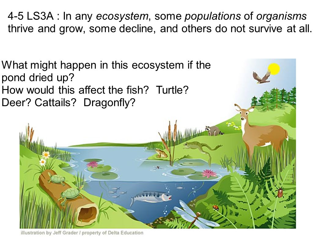 4-5 LS3A : In any ecosystem, some populations of organisms thrive and grow, some decline, and others do not survive at all. What might happen in this
