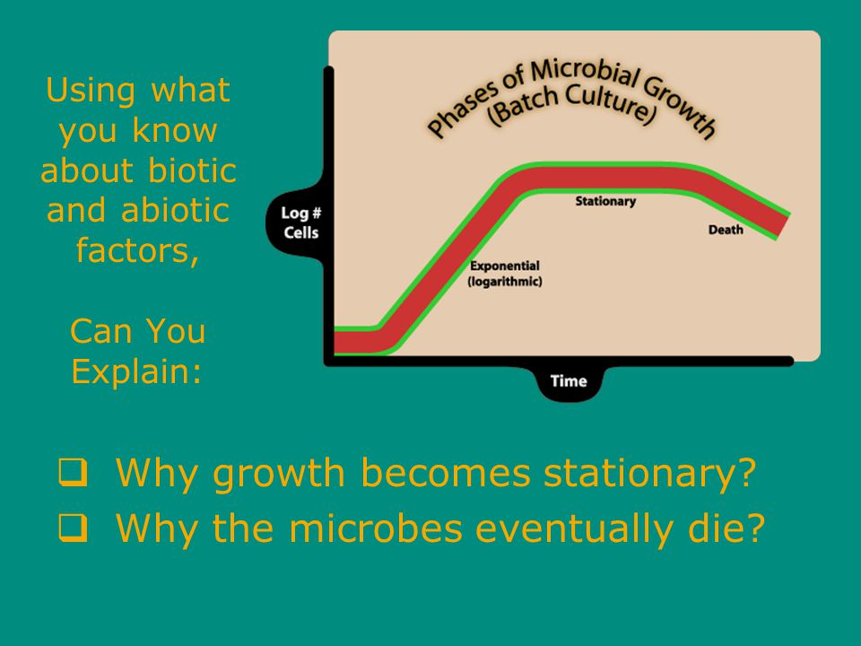 Using what you know about biotic and abiotic factors, Can You Explain:  Why growth becomes stationary.
