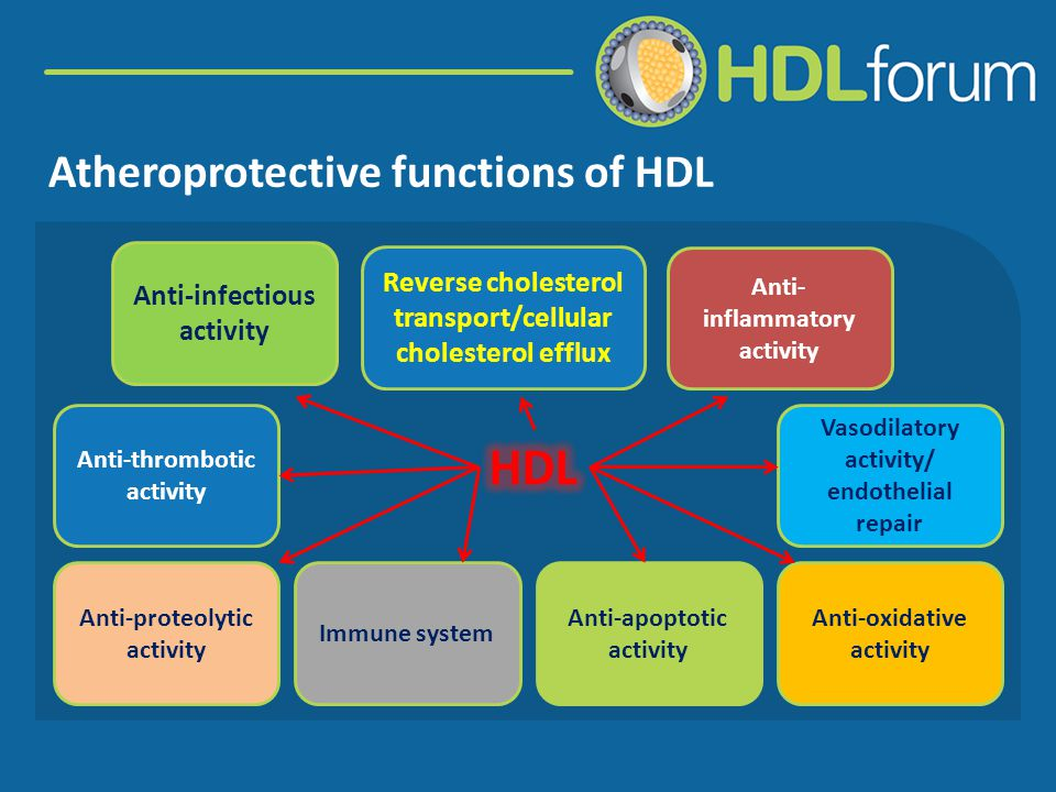 Assays for HDL function HDL inhibits monocyte chemotaxis induced by LDL using an in vitro reconstituted artery wall model by the coculture of smooth muscle cells and endothelial cells.