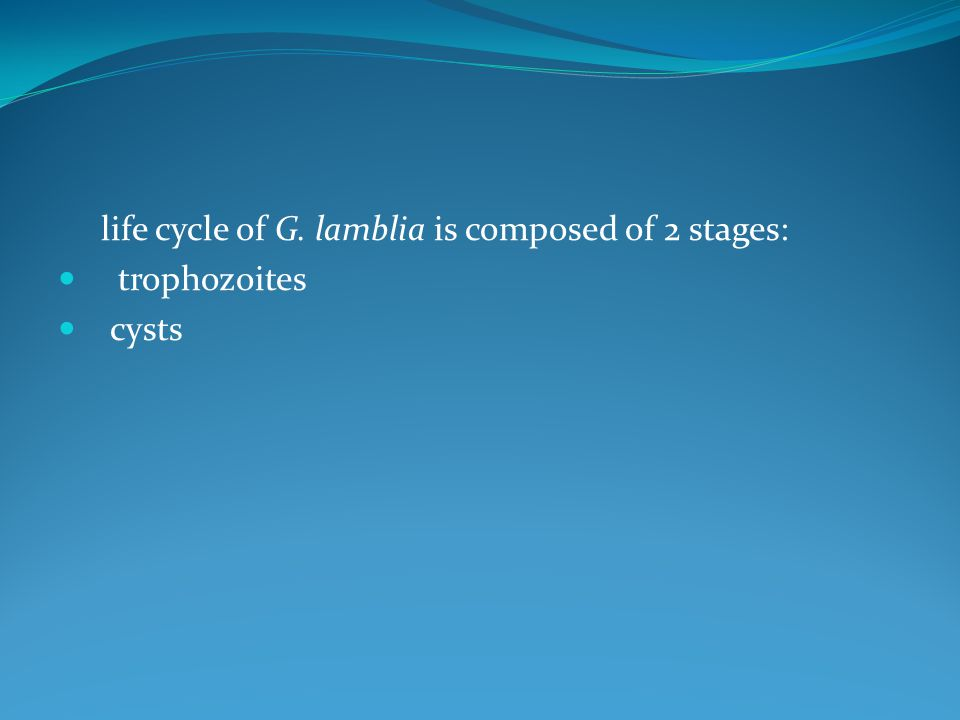 life cycle of G. lamblia is composed of 2 stages: trophozoites cysts