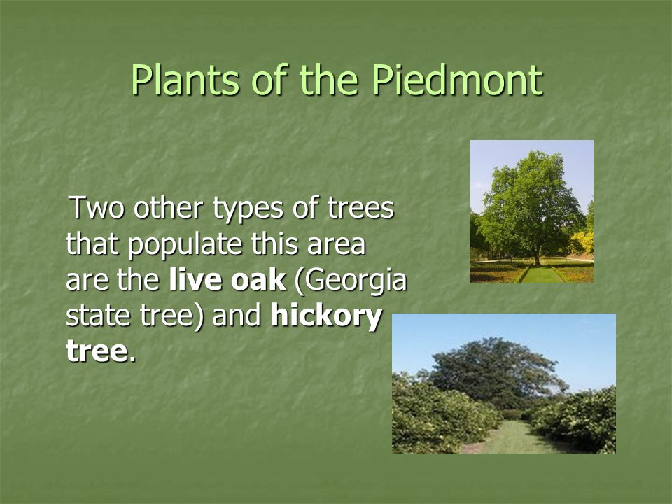 Plants of the Piedmont Two other types of trees that populate this area are the live oak (Georgia state tree) and hickory tree. Two other types of tre