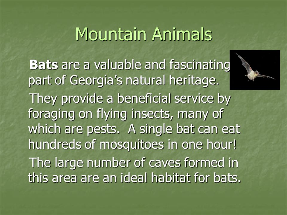 Mountain Animals Bats are a valuable and fascinating part of Georgia's natural heritage. Bats are a valuable and fascinating part of Georgia's natural