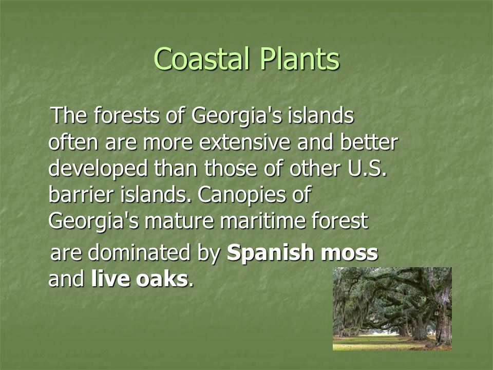 Coastal Plants The forests of Georgia's islands often are more extensive and better developed than those of other U.S. barrier islands. Canopies of Ge