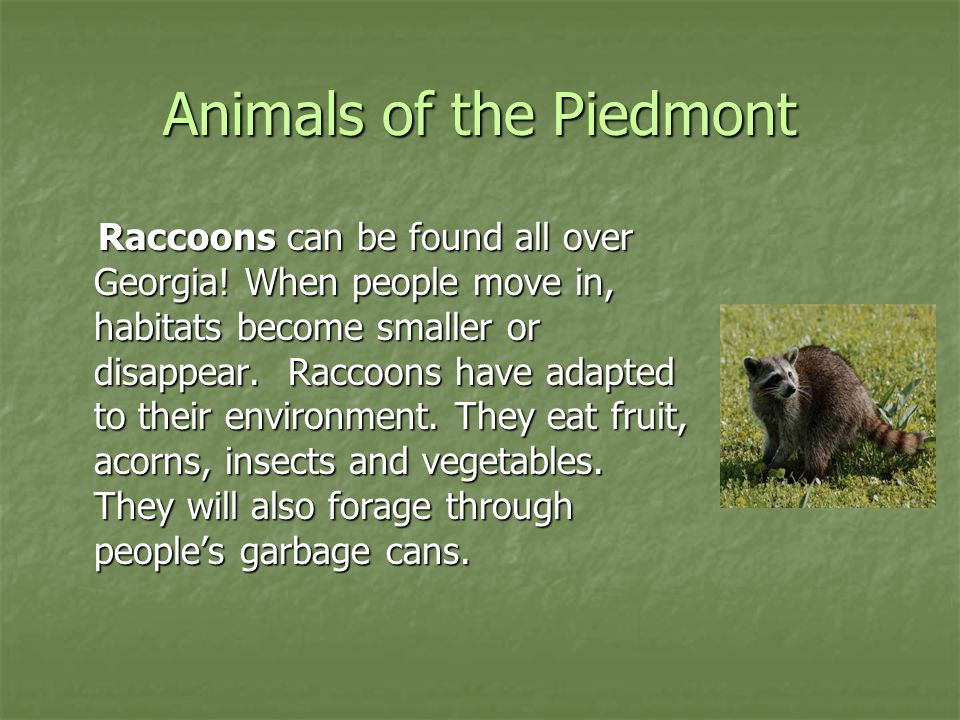 Animals of the Piedmont The Great Horned Owl is the largest owl of the southern United States.