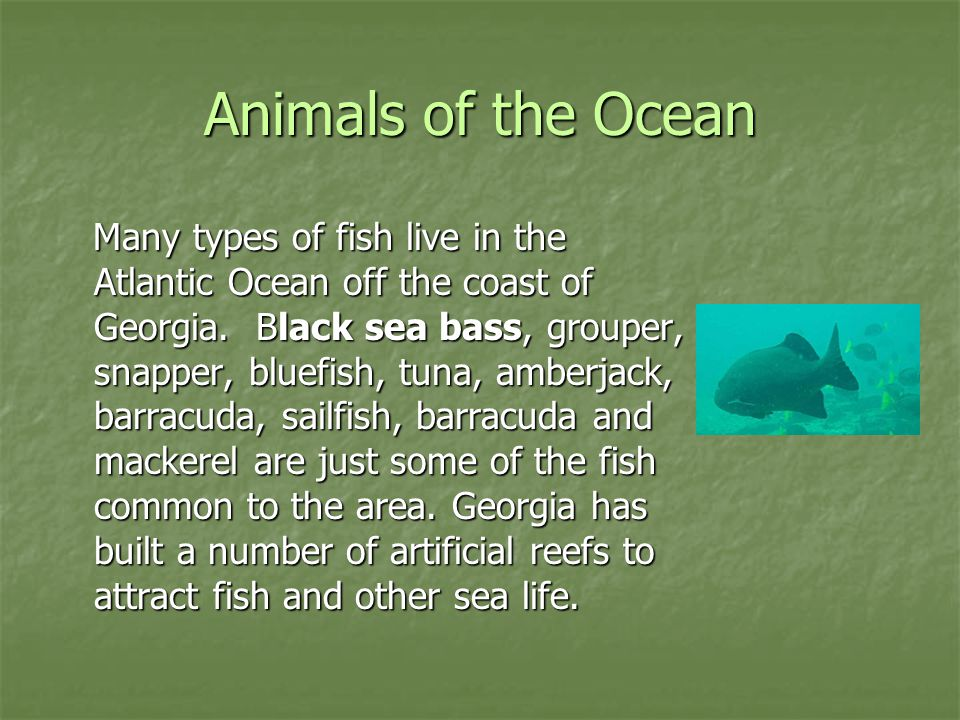 Animals of the Ocean Many types of fish live in the Atlantic Ocean off the coast of Georgia. Black sea bass, grouper, snapper, bluefish, tuna, amberja