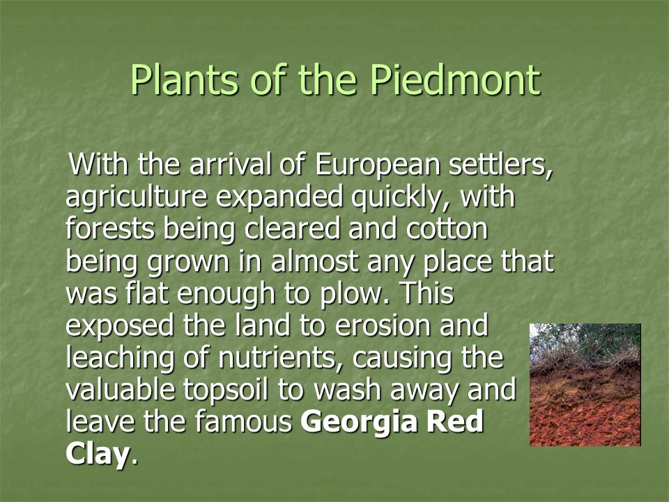 Plants of the Piedmont Pine trees are the first to come back when a field is abandoned because they are tolerant of sunlight and dry conditions.