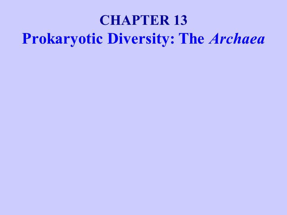 Pyrodictium and Pyrolobus are examples of prokaryotes whose growth temperature optimum lies above 100ºC.