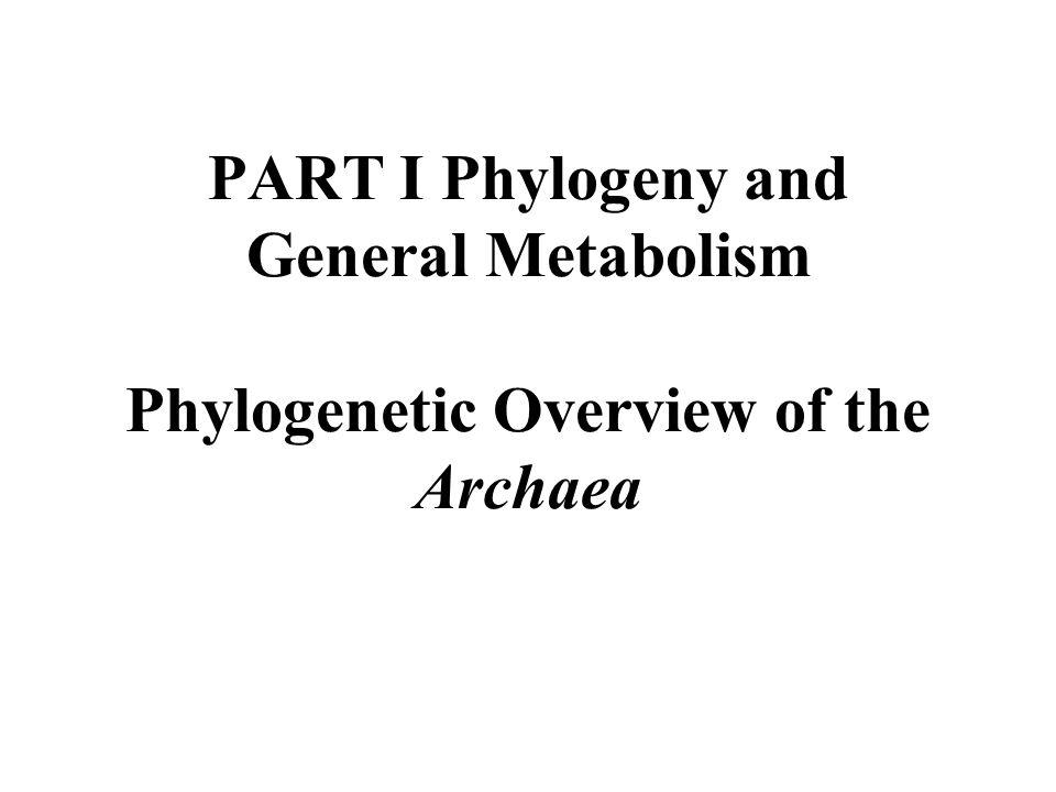 Archaea form four major phyla, the Euryarchaeota, the Crenarchaeota, the Korarchaeota, and the Nanoarchaeota.