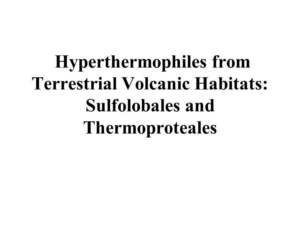 Hyperthermophiles from Terrestrial Volcanic Habitats: Sulfolobales and Thermoproteales
