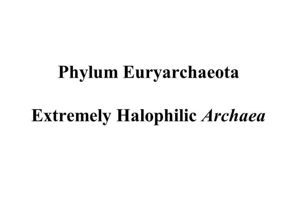 PART III Phylum Crenarchaeota Habitats and Energy Metabolism of Crenarchaeotes