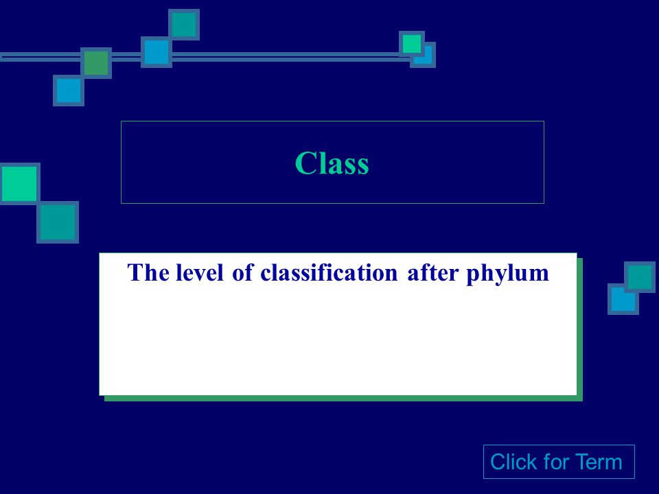 Class The level of classification after phylum Click for Term