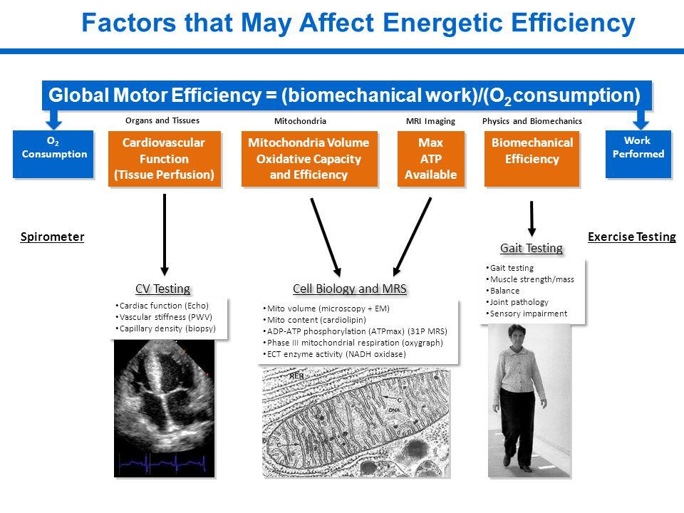 Factors that May Affect Energetic Efficiency Global Motor Efficiency = (biomechanical work)/(O 2 consumption) O 2 Consumption O 2 Consumption Work Performed Work Performed Spirometer Exercise Testing