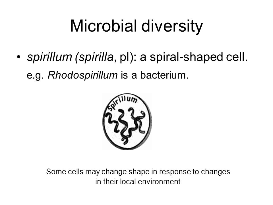 Microbial diversity spirillum (spirilla, pl): a spiral-shaped cell. e.g. Rhodospirillum is a bacterium. Some cells may change shape in response to cha