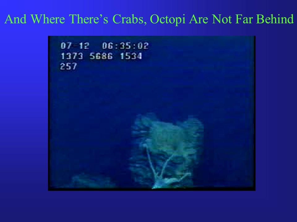 And Where There's Crabs, Octopi Are Not Far Behind