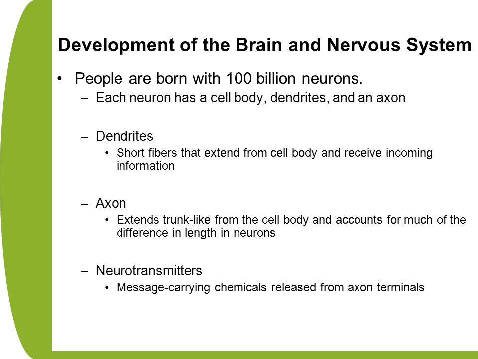 People are born with 100 billion neurons. –Each neuron has a cell body, dendrites, and an axon –Dendrites Short fibers that extend from cell body and