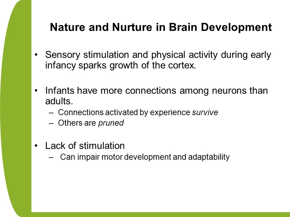 Nature and Nurture in Brain Development Sensory stimulation and physical activity during early infancy sparks growth of the cortex. Infants have more