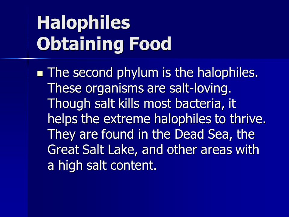 Halophiles Obtaining Food The second phylum is the halophiles.