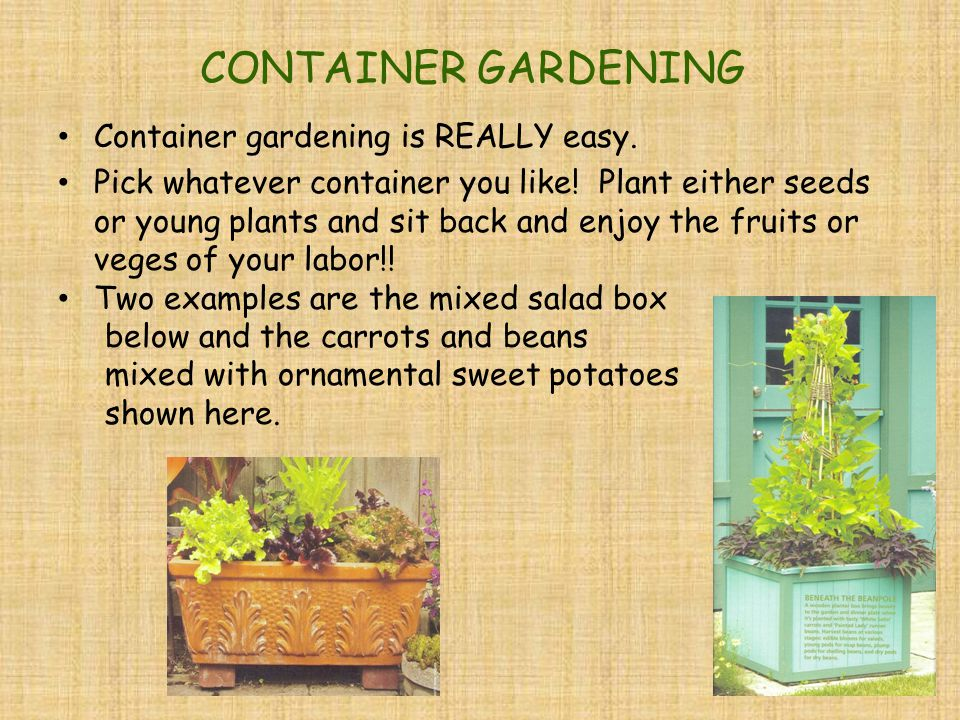 CONTAINER GARDENING Container gardening is REALLY easy.