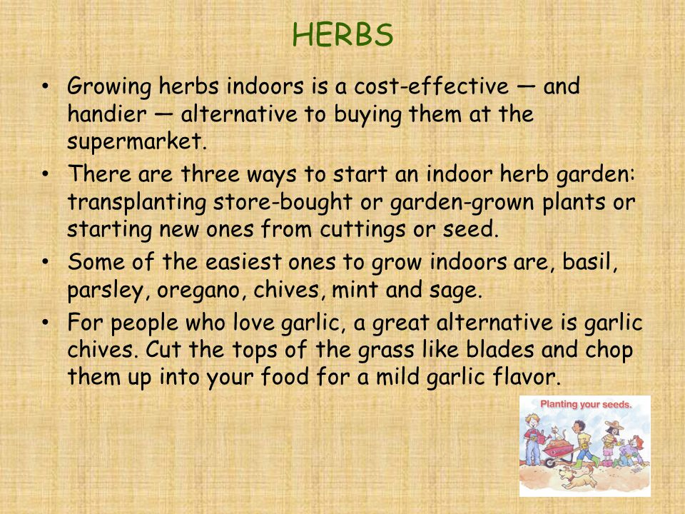 HERBS Growing herbs indoors is a cost-effective — and handier — alternative to buying them at the supermarket.