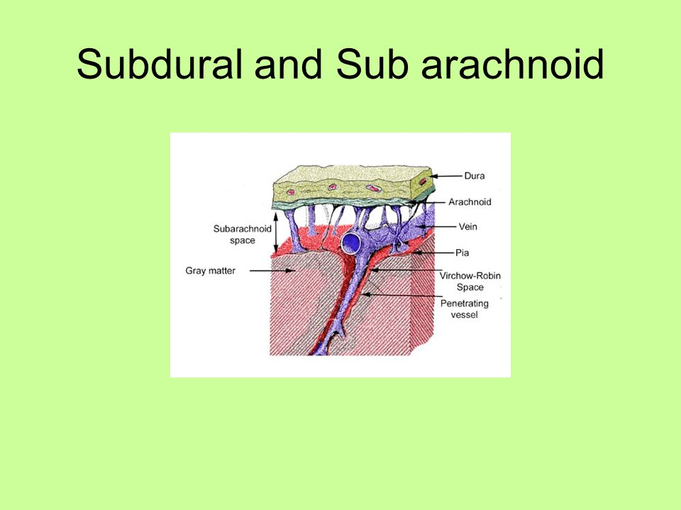 Subdural and Sub arachnoid