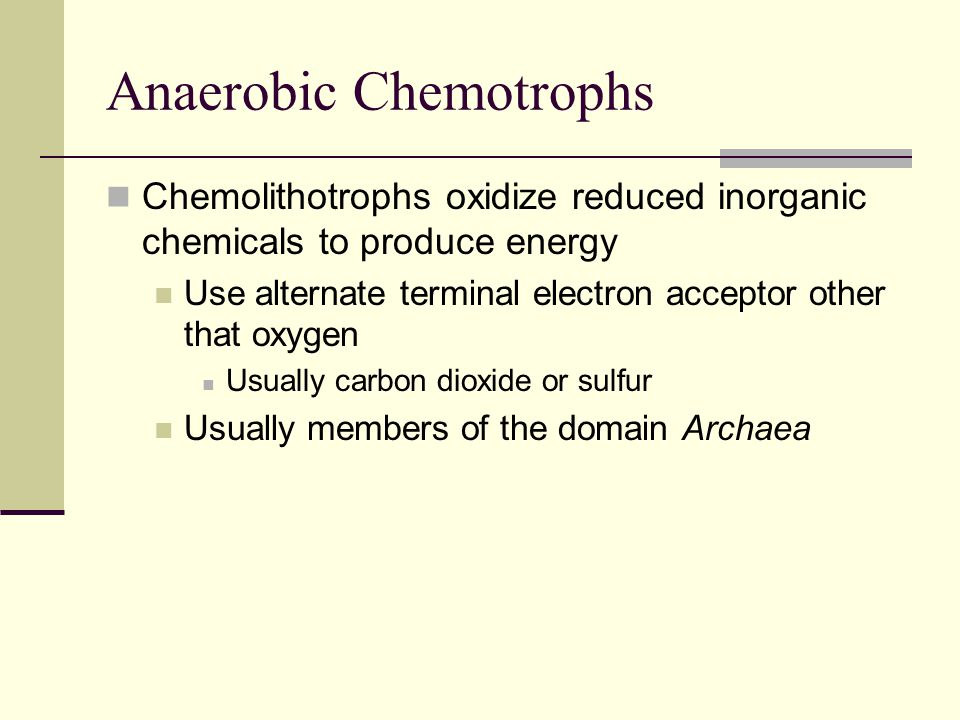 Methanogens Members of Domain Archaea Produce energy by reducing hydrogen and using carbon dioxide as terminal electron acceptor This process creates methane and water Commonly found in sewage, swamps marine sediments and digestive tract of mammals Highly sensitive to oxygen Anaerobic chambers used for cultivation
