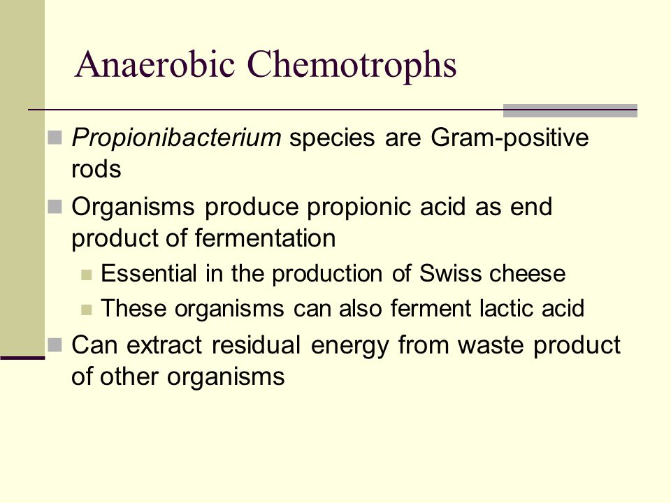 Anoxygenic Phototrophs Anoxygenic phototrophs oxidize hydrogen sulfide or organic molecules when making NADPH Many organisms inhabit restricted ecological niches Aquatic habitats such as bogs, lakes and upper layers of mud Includes purple bacteria and green bacteria
