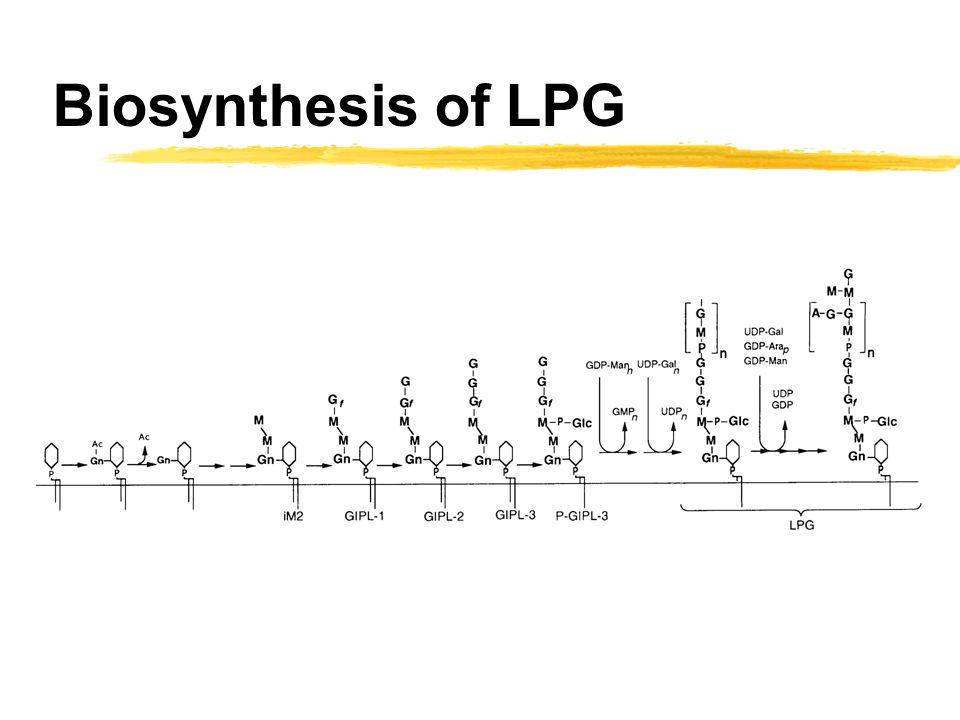 Biosynthesis of LPG