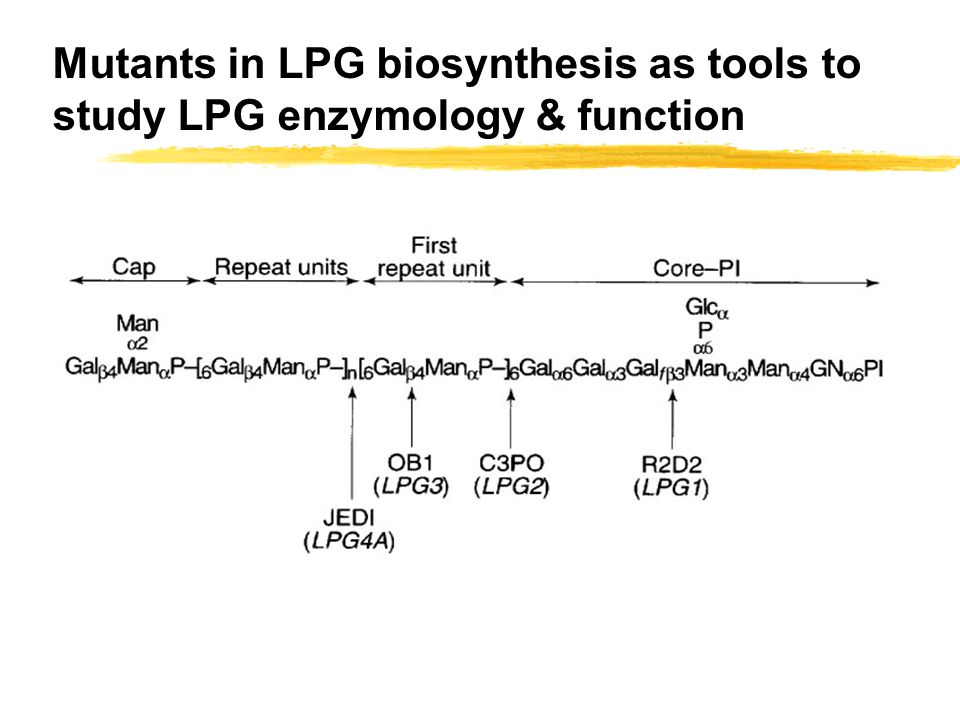 Mutants in LPG biosynthesis as tools to study LPG enzymology & function