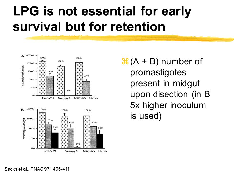 LPG is not essential for early survival but for retention z(A + B) number of promastigotes present in midgut upon disection (in B 5x higher inoculum is used) Sacks et al., PNAS 97: 406-411