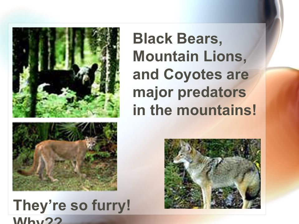 Lots of animals love to be high in the trees of the Georgia Mountains! Can you name these three
