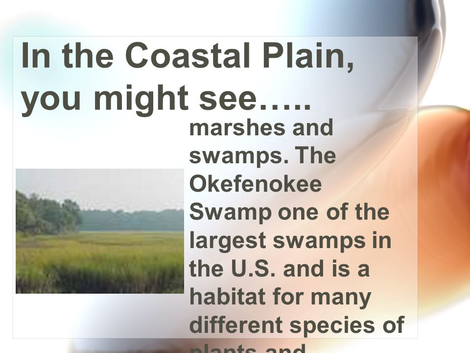 In the Coastal Plain, you might see….. a lack of hills and an abundance of water.