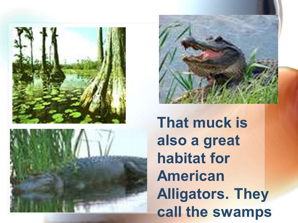 The Okefenokee Swamp is obviously a very wet, mucky place to be.