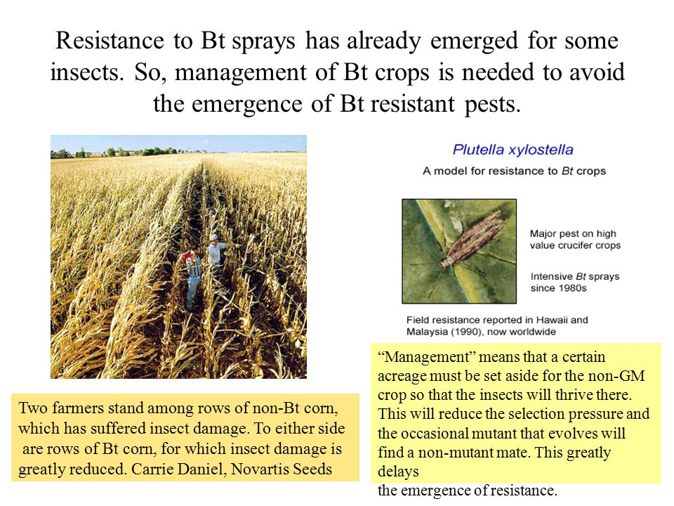 Resistance to Bt sprays has already emerged for some insects.