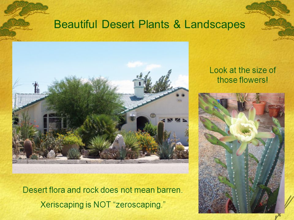 Beautiful Desert Plants & Landscapes Desert flora and rock does not mean barren.