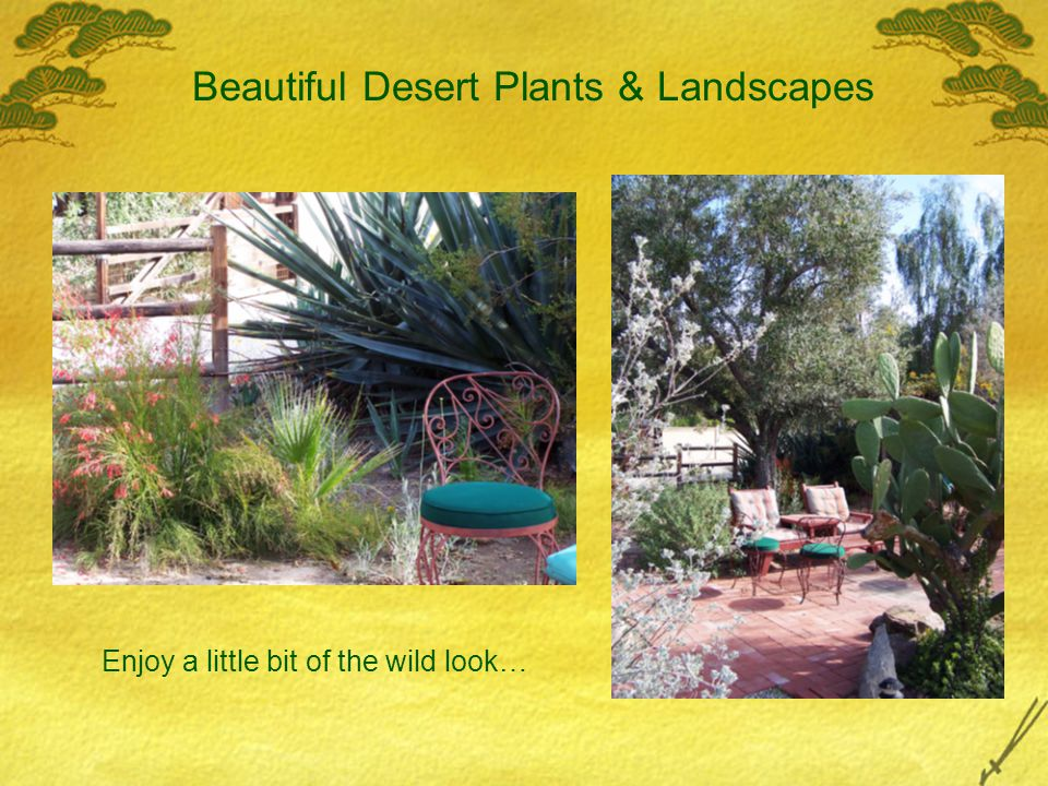 Beautiful Desert Plants & Landscapes Enjoy a little bit of the wild look…