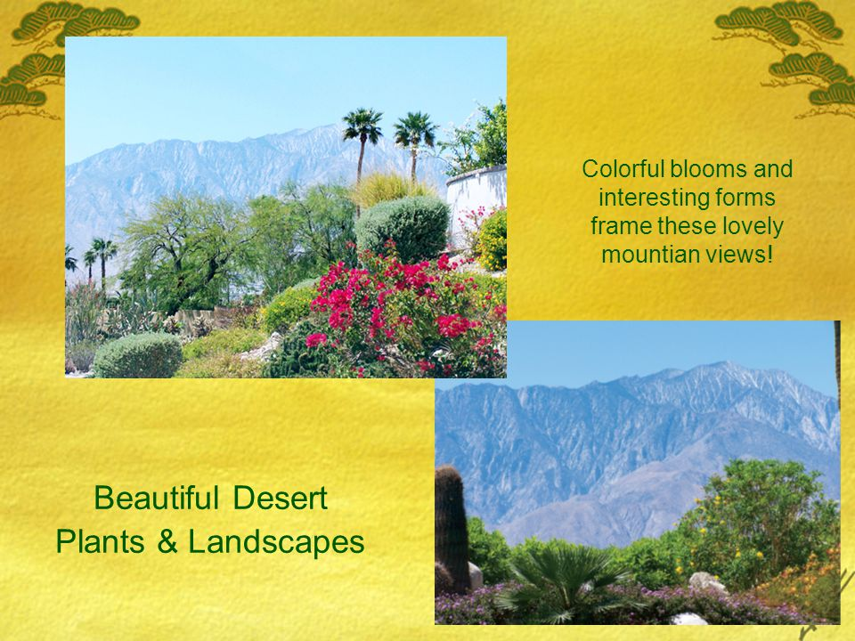 Beautiful Desert Plants & Landscapes Colorful blooms and interesting forms frame these lovely mountian views!